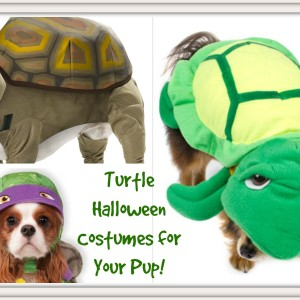 Dog Turtle Halloween Costumes